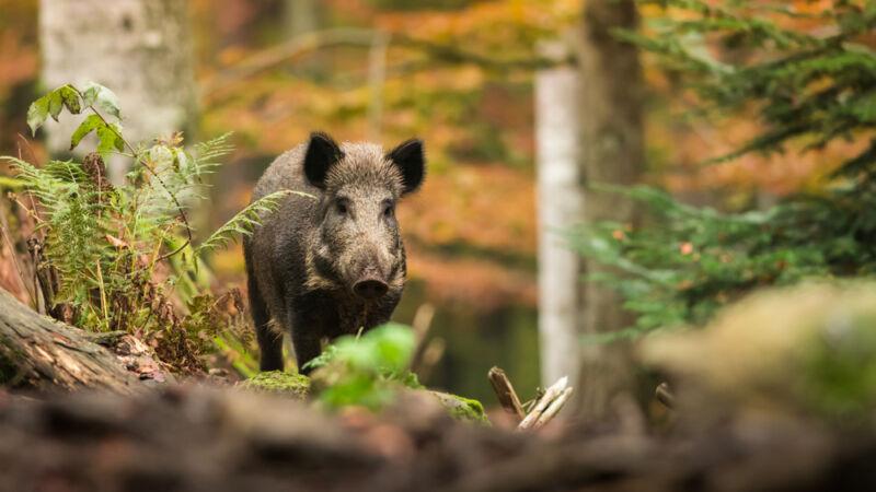 Zijn wilde dieren in Nederland gevaarlijk?